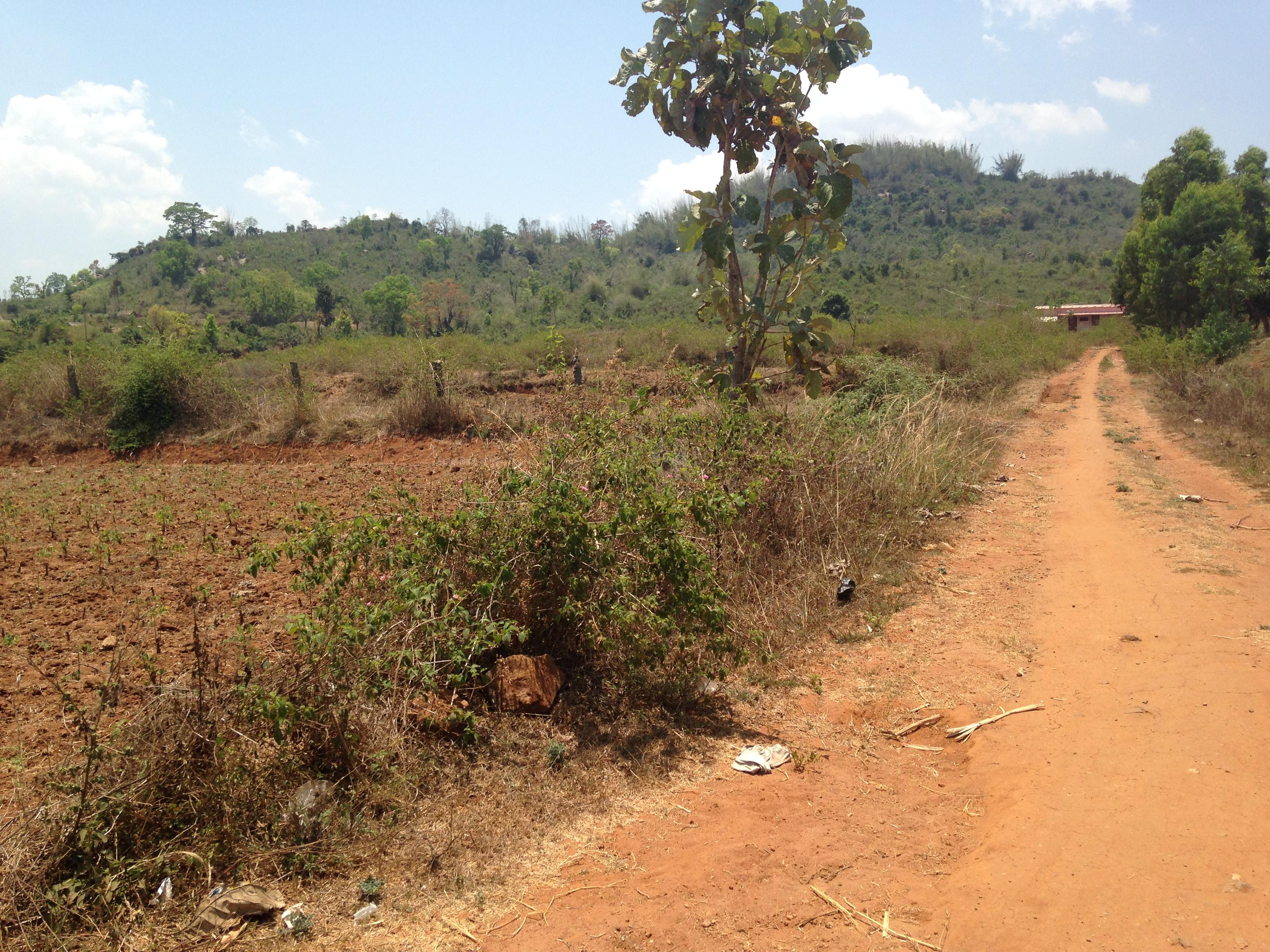 FOR SALE – FARMLAND in Kalvarayan Hills TN | KKA Real Estate